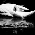 baby swan von Marianna Tankelevich