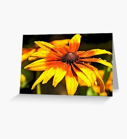 Watered Rudbeckia Greeting Card