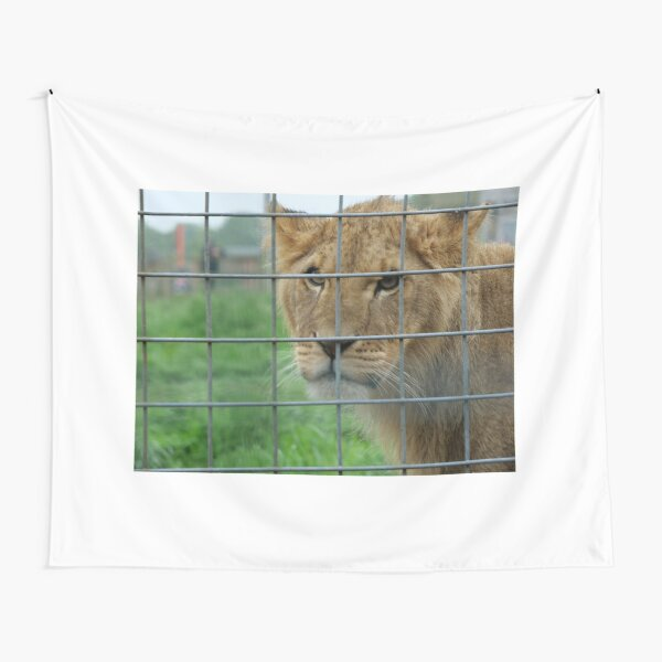 Lioness stare from inside enclosure zoo Tapestry