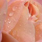 Dew you love me?  by Jamaboop