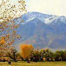 """""""Mount Tom"""" by Lynn Bawden"""