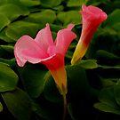 Pretty in Pink by Joe Mortelliti