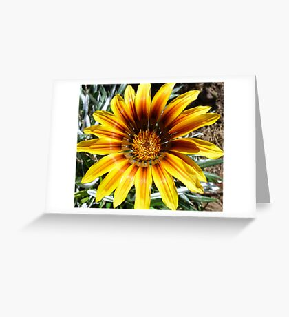 Gaillardia - my garden Greeting Card