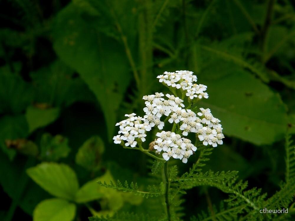 Wildflower by ctheworld