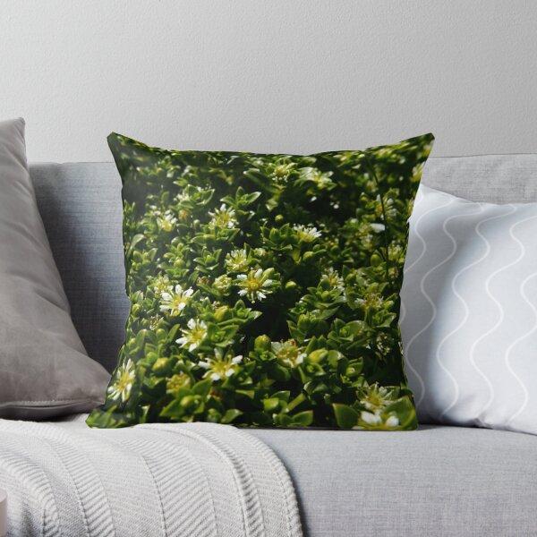 Sea Sandwort (Honckenya peploides) Throw Pillow