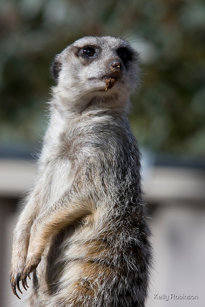 Do I have something on my chin? Meerkat by Kelly Robinson