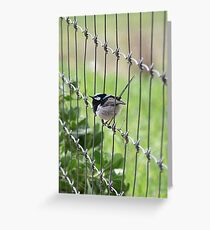 Blue wren Greeting Card