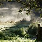 Misty Morn - Magpie Springs - Adelaide Hills Wine Region - South Australia  by MagpieSprings