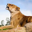 King Of The Hill by Derek Kan