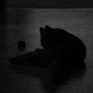 Shade of Cat by Robert Drobek