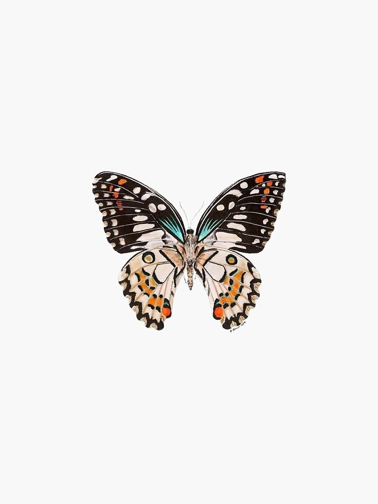 Butterfly by lucianawalter