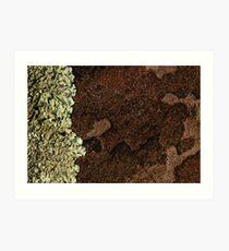 Lichen on Quartzite Art Print