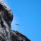 Flying high by mojgan