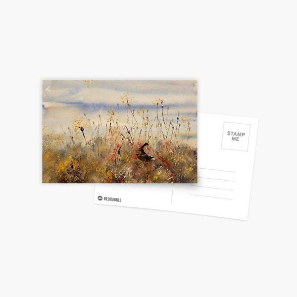 Daylight Search Postcard