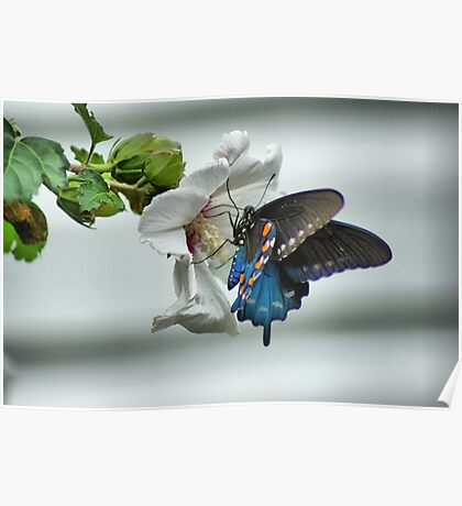 Butterfly Lunch Poster