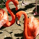 Pink Flamingos by Missy Yoder