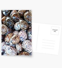 Tiger Cowries Postcards