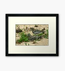 Water thick knee Framed Print