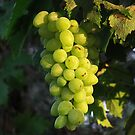 Grape on  8 August by rasim1