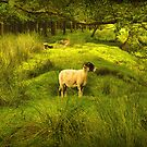 PASTURES NEW by j.p. Howley