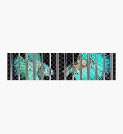 Negative Fish Behind Bars on Transparency Grid Photographic Print