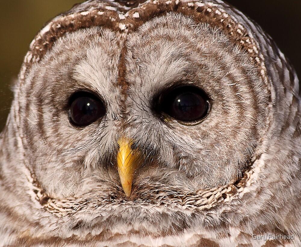 """Big Brown Eyes / Barred Owl"" by Gary Fairhead | Redbubble"