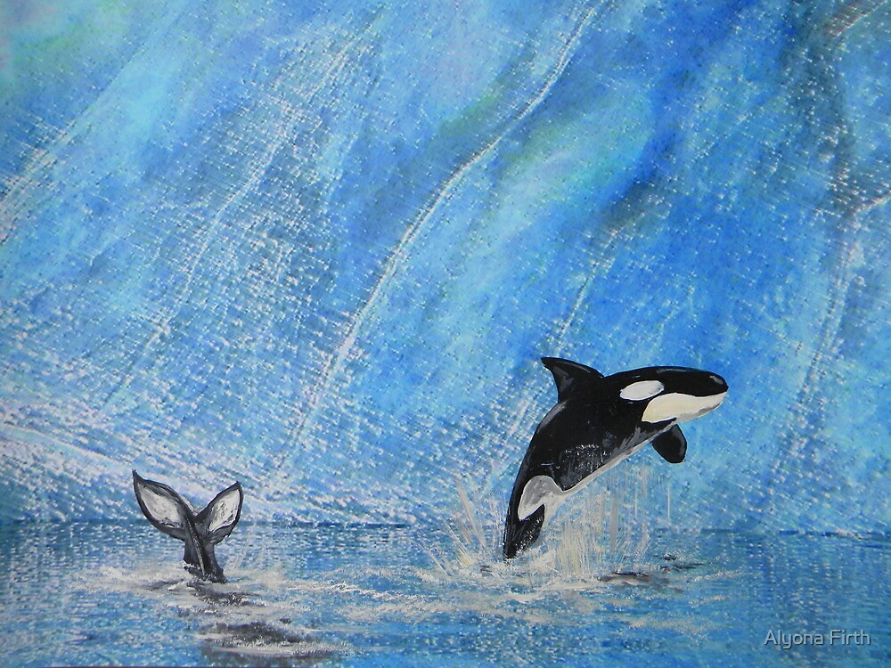 The Orkas - blue waters - natural world by Alyona Firth