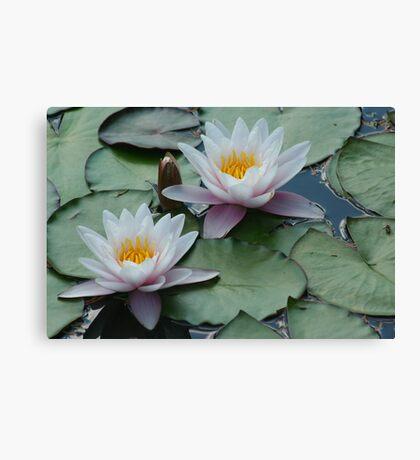 Waterlilies at Fredrick Meijer Gardens Canvas Print