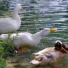 A Ducking Good Time by Sandra Moore