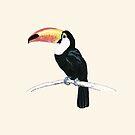 Toucan by Dan Tabata