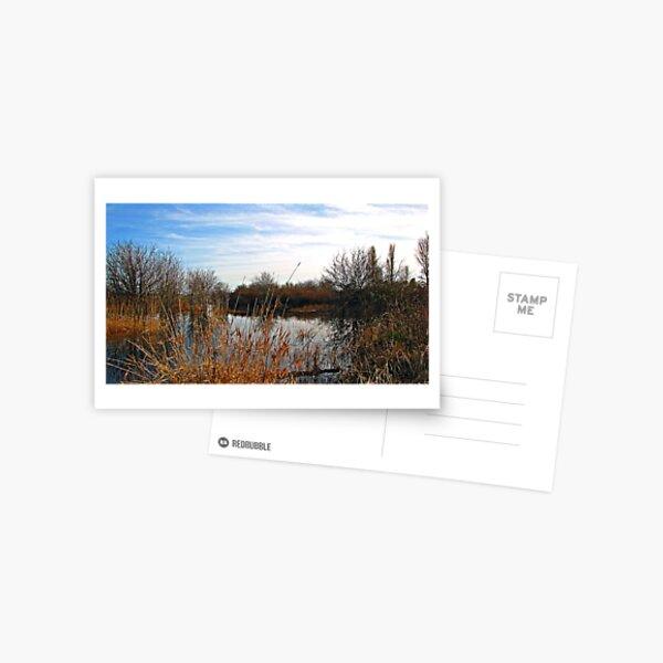 ~ Wetlands ~ Postcard