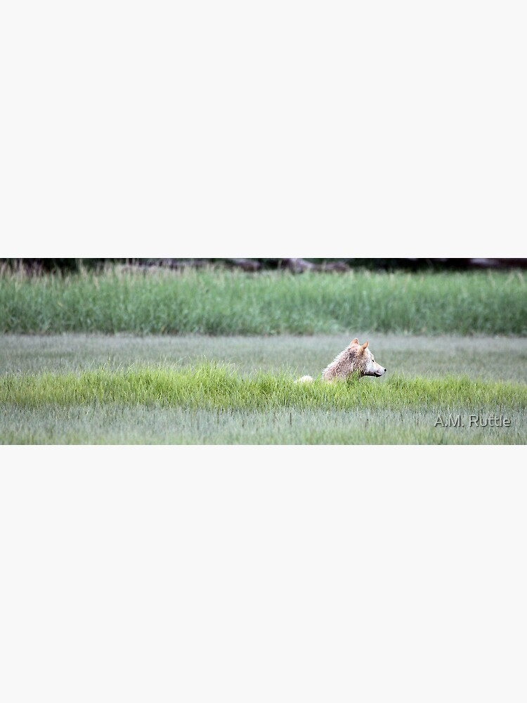 Wolf Just Napping In The Wild... Alaska's Katmai Peninsula (pan) by annruttle