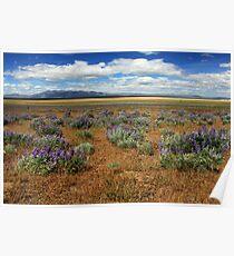 Springtime In Honey Lake Valley Poster
