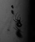 Black Spider.... by C. Rodriguez