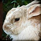 Portrait of a Rabbit by Laura Palazzolo