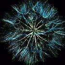 Dandelion seedhead by Photos - Pauline Wherrell