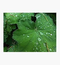 Water drops on leaves Photographic Print