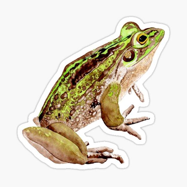 Green and Golden Bell Frog Sticker