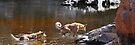 Ormiston Dingo Pano by mspfoto