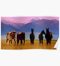 Loneliest Road In America Wild Horse Herd  Poster
