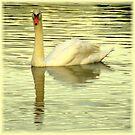 Avian Beauty ~ Part Twenty by artisandelimage