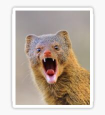 Slender Mongoose - Taking on LIfe Sticker