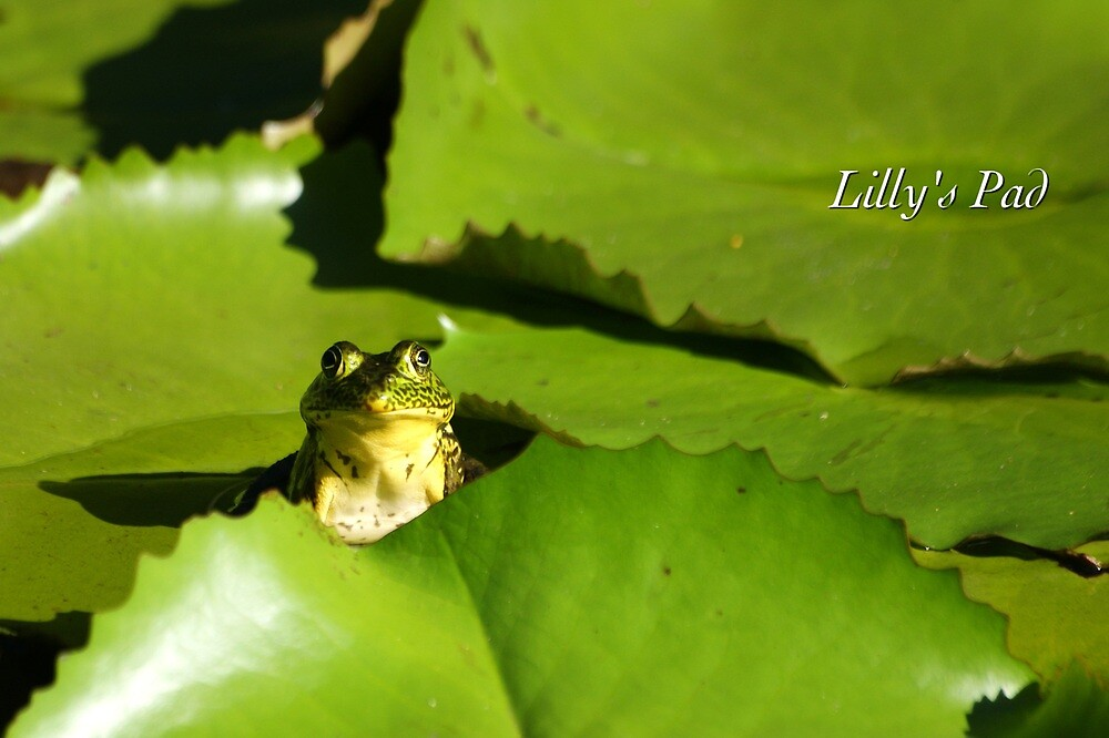 Lily's Pad by JpPhotos