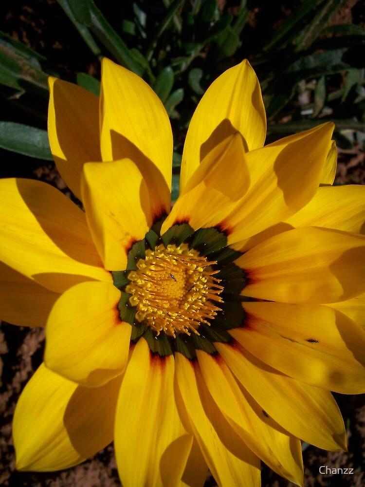 Sunshine Flower by Chanzz