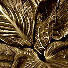 Skunk Cabbage - Sepia by Debra Fedchin