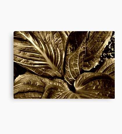 Skunk Cabbage - Sepia Canvas Print