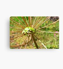 Tree frog in Dill plant Canvas Print