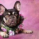 The Frenchie Collection | Tia by Peggy Colclough