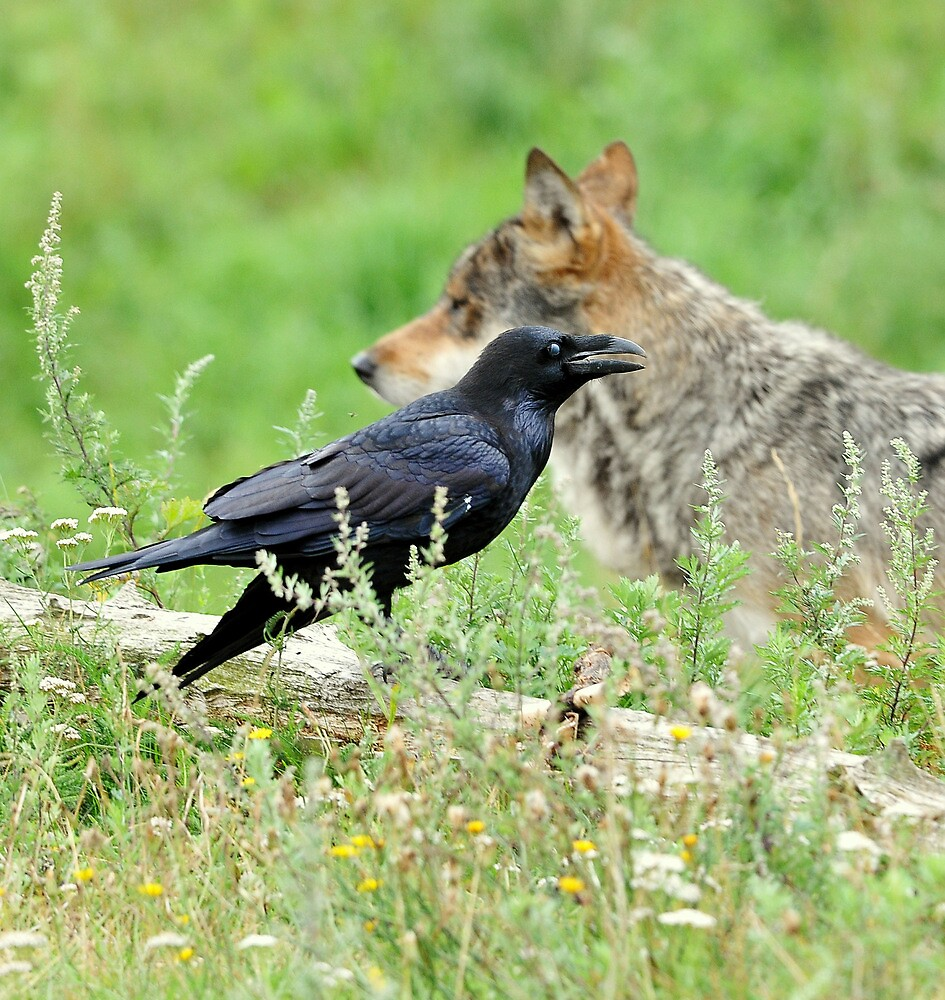 Who's afraid of the big bad wolf ? by Alan Mattison