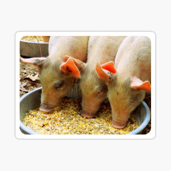 Three Little Pigs Sticker